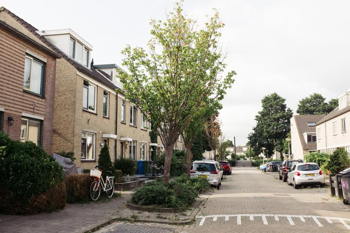 Rekening houden met bestaande bomen