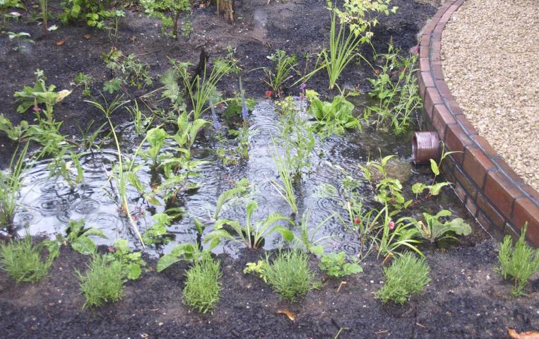 Meer klimaatadaptieve tuinen
